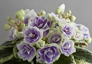 Какие зарубежные букеты нескольких цветов